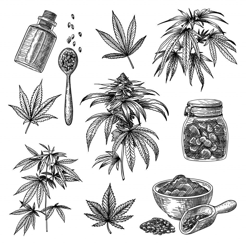 cannabis semillas de cáñamo aceite