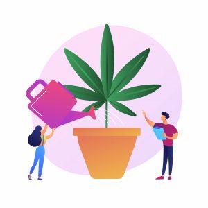 cultivo-cáñamo-cannabis-españa-canamo